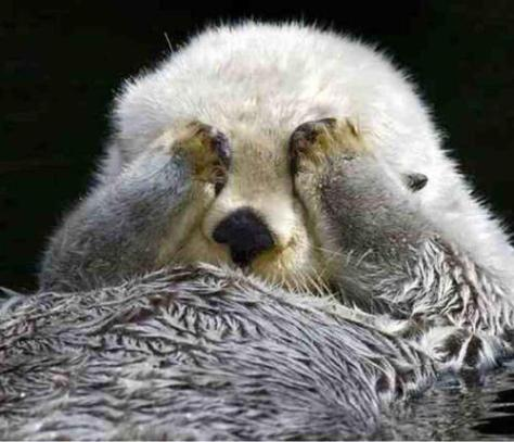 Crown Conservation - a super fluffy sea otter paw scrubs his eyes